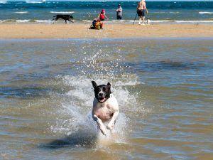 Top Pet-Friendly Vacation Spots in Australia
