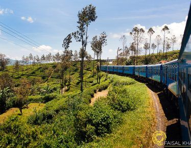 5 Must Do Things in Nuwara Eliya, Sri Lanka – Beyond Tea Plantations