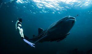 Los 5 mejores lugares para bañarte con tiburones